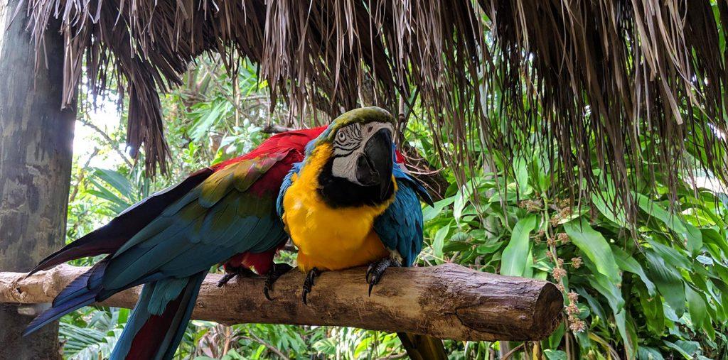 Jungle Island Parrots