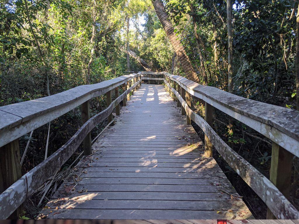 Mahogany Hammock Trail Everglade